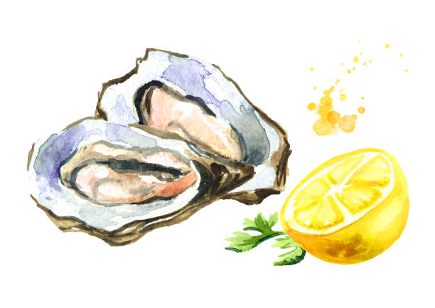 Oyster with lemon, seafood. Watercolor hand drawn illustration, isolated on white background Oyster with lemon, seafood. Watercolor hand drawn illustration, isolated on white background love potion stock illustrations