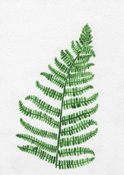 painting of fern leaf water color paint for postcard on whit drawing paper background. vector art illustration