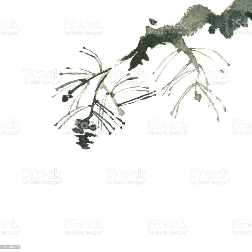 painting of pine branch isolated on white vector art illustration