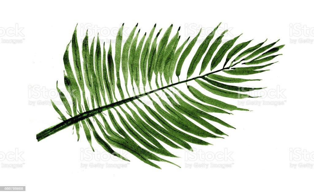 Palm leaf palm leaf - immagini vettoriali stock e altre immagini di acquerello royalty-free