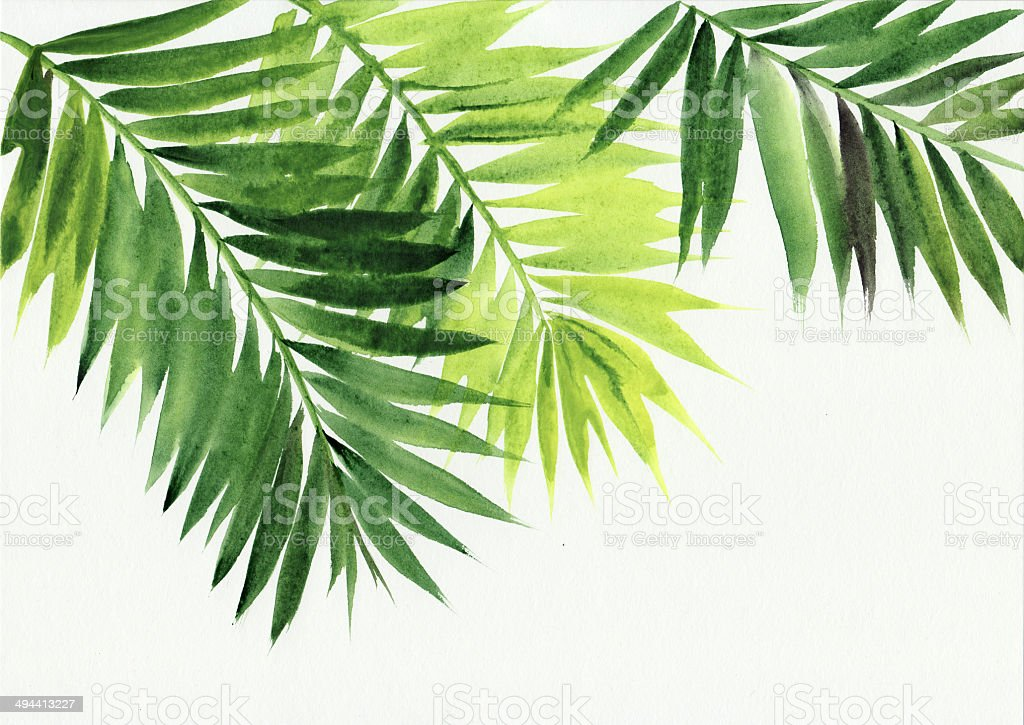 Palm leaves background vector art illustration