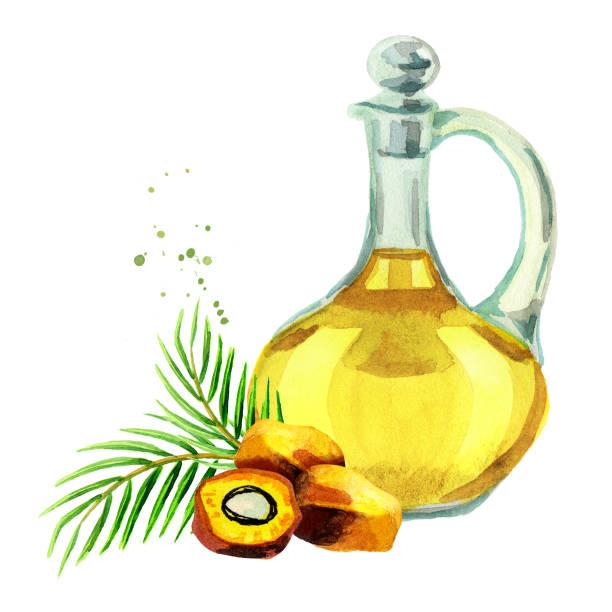 ilustrações de stock, clip art, desenhos animados e ícones de palm oil. hand drawn watercolor illustration - oleo palma