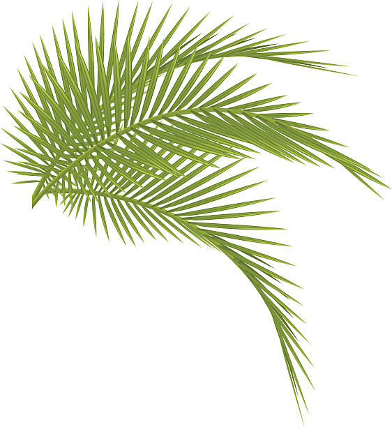 Royalty Free Coconut Palm Tree Clip Art, Vector Images ...