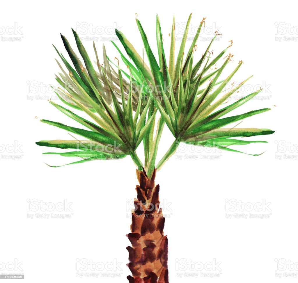 palm tree royalty-free palm tree stock vector art & more images of bahamas