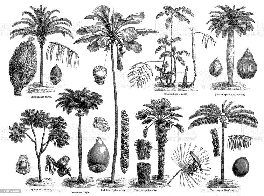 Palms vector art illustration