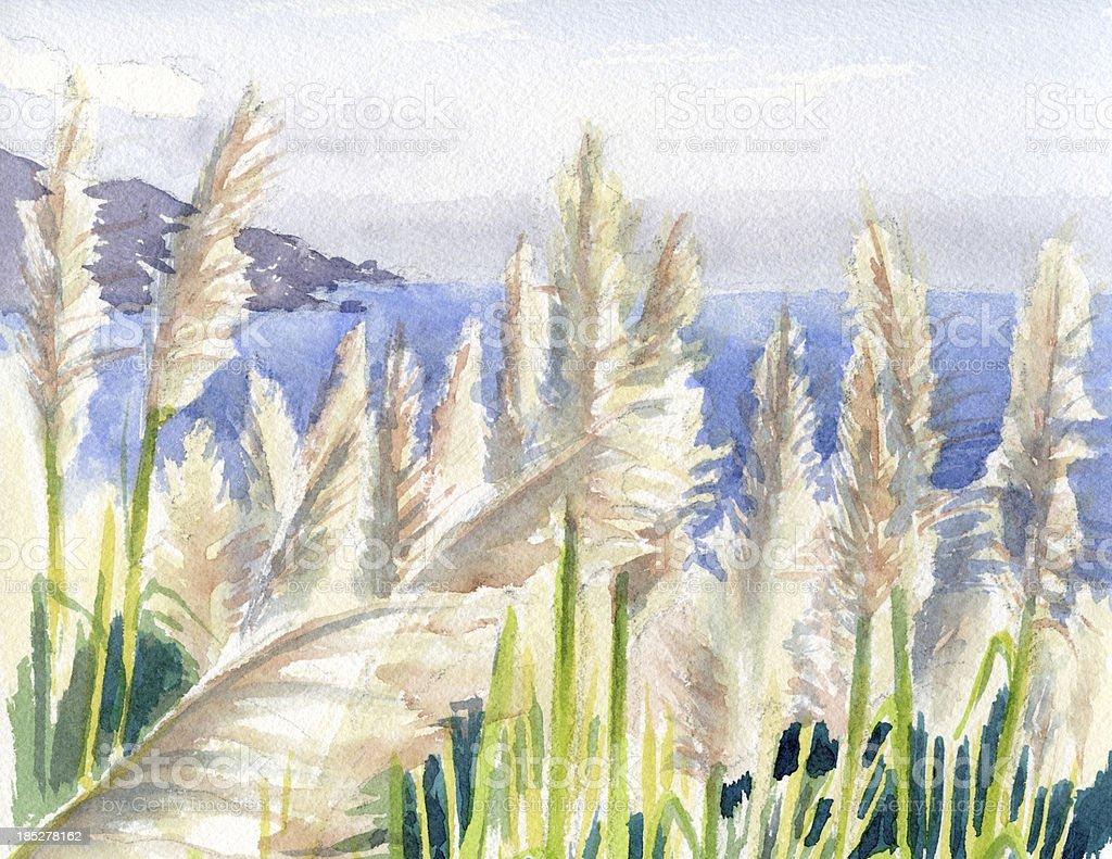 Pampas Grass By Big Sur vector art illustration