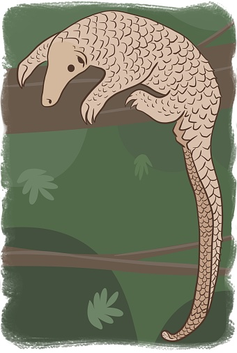 Pangolin or scaly anteater, a scales covered mammal from tropical areas such as Africa and Asia.