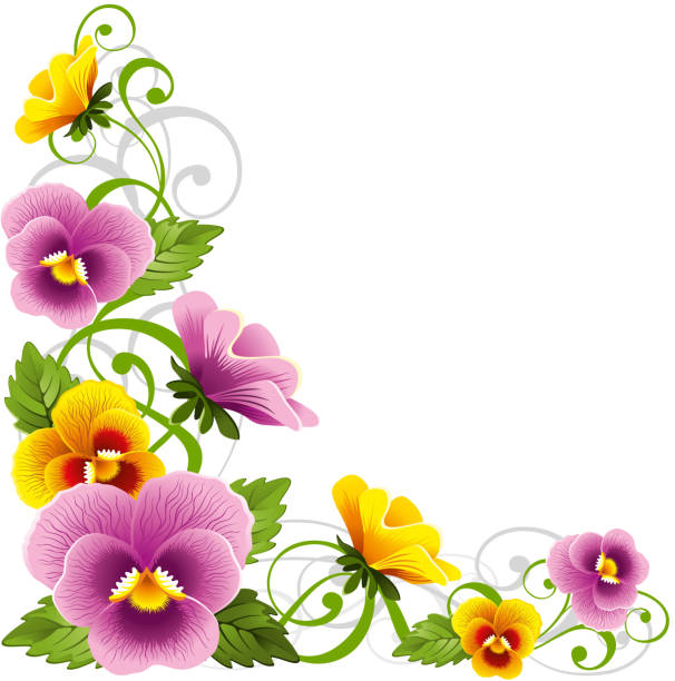 Pansy Gentle floral design element with pansy pansy stock illustrations