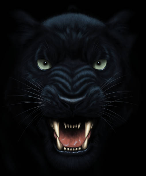 Panther face painting Angry panther face in darkness. Digital painting. aggression stock illustrations