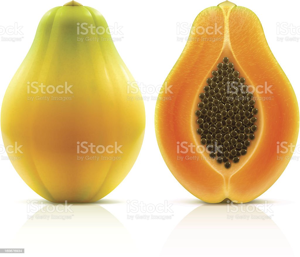 Papaya vector art illustration