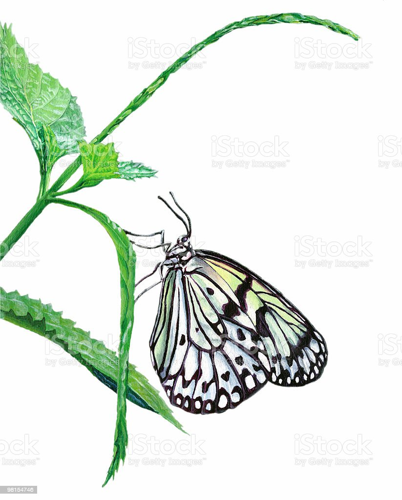 Paper Kite Butterfly Isolated on White - Painted Image royalty-free stock vector art