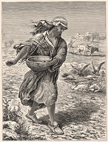A farmer sowing in a field showing the parable of wheat and tares. Bible theology. Christianity. Illustration published 1879. Source: Original edition is from my own archives. Copyright has expired and is in Public Domain.
