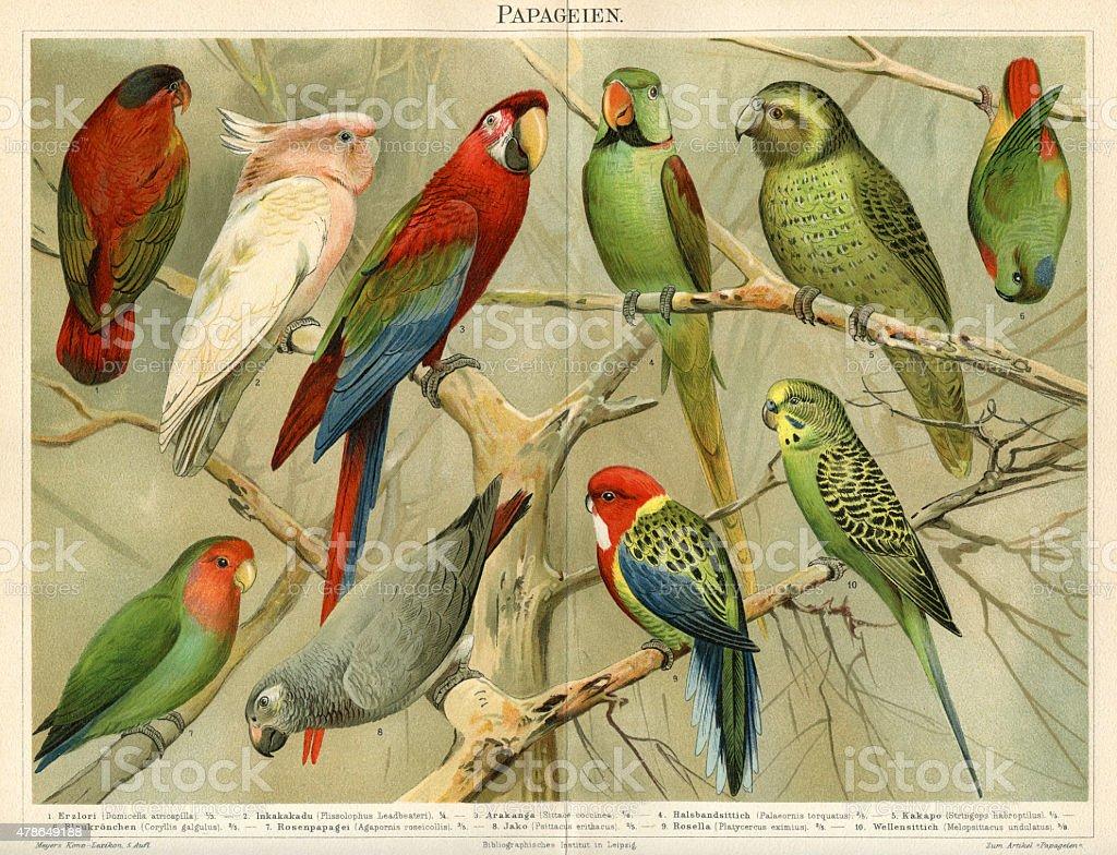 Parrots Chromolithograph 1896 vector art illustration
