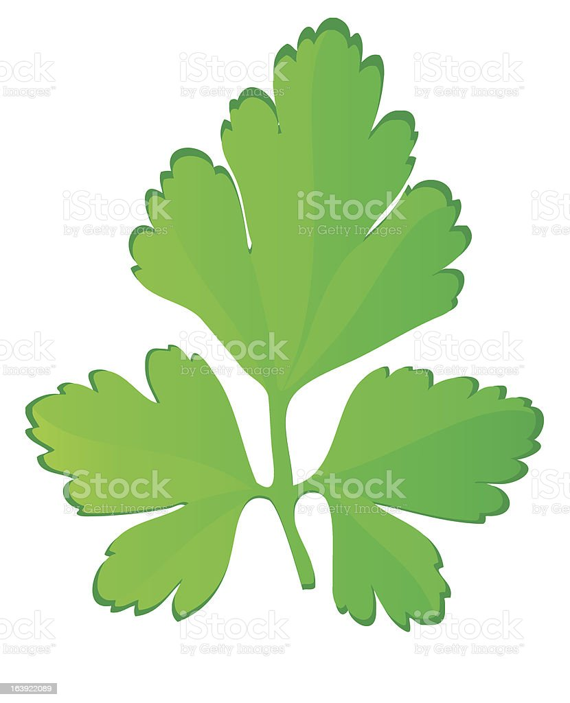 parsley vector illustration royalty-free parsley vector illustration stock vector art & more images of branch - plant part