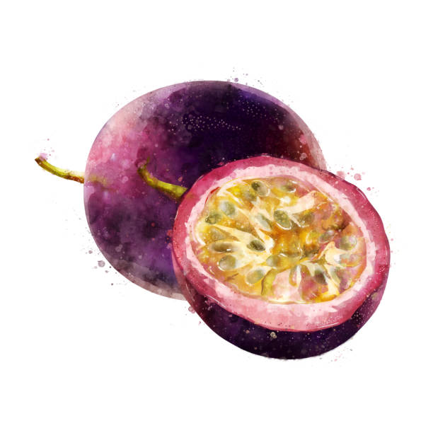 illustrazioni stock, clip art, cartoni animati e icone di tendenza di passionfruit on white background. watercolor illustration - passiflora