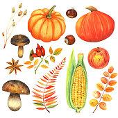 Pattern  with autumn pumkin