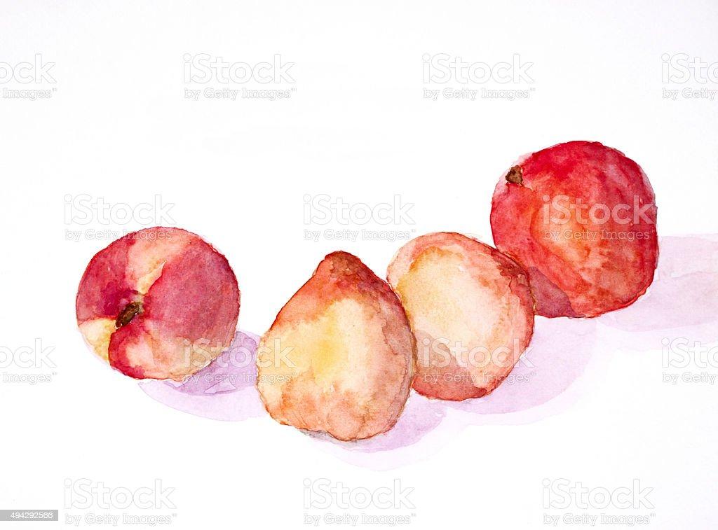 peaches still life ' watercolor painted vector art illustration