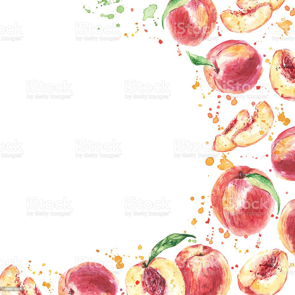 Peaches. Watercolor hand drawn fruits. Eco food background vector art illustration