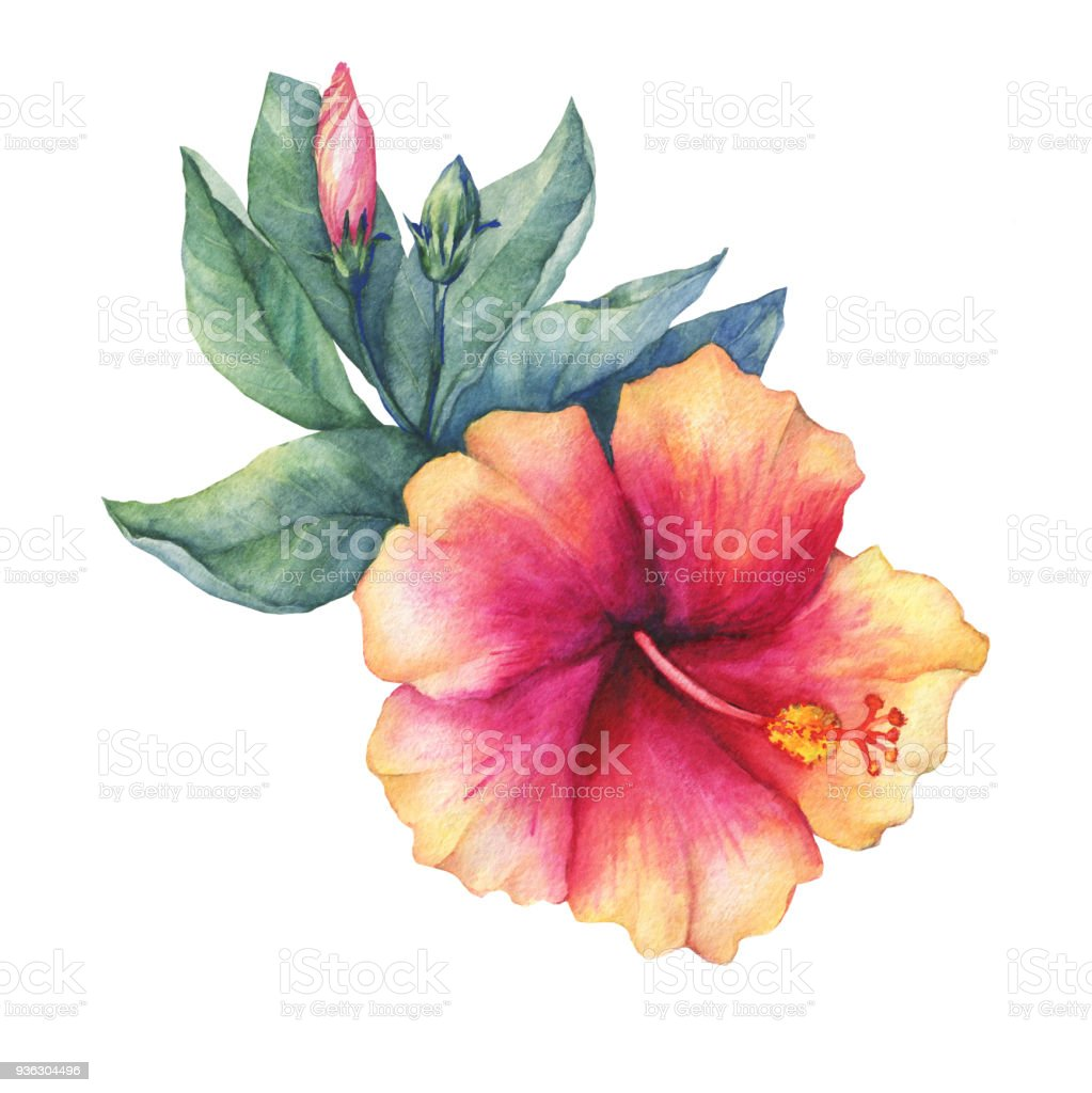 Peachpink Hibiscus Flower Watercolor Hand Drawn Painting