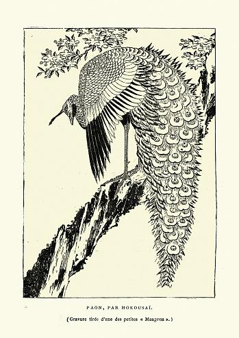 Peacock, after Hokousai, Art of Japan, Japanese woodcut