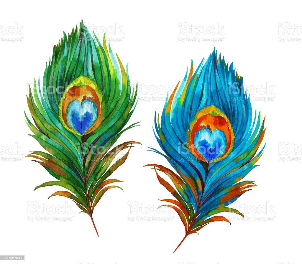 royalty free peacock feather clip art vector images illustrations rh istockphoto com peacock feather clip art images flute with peacock feather clip art