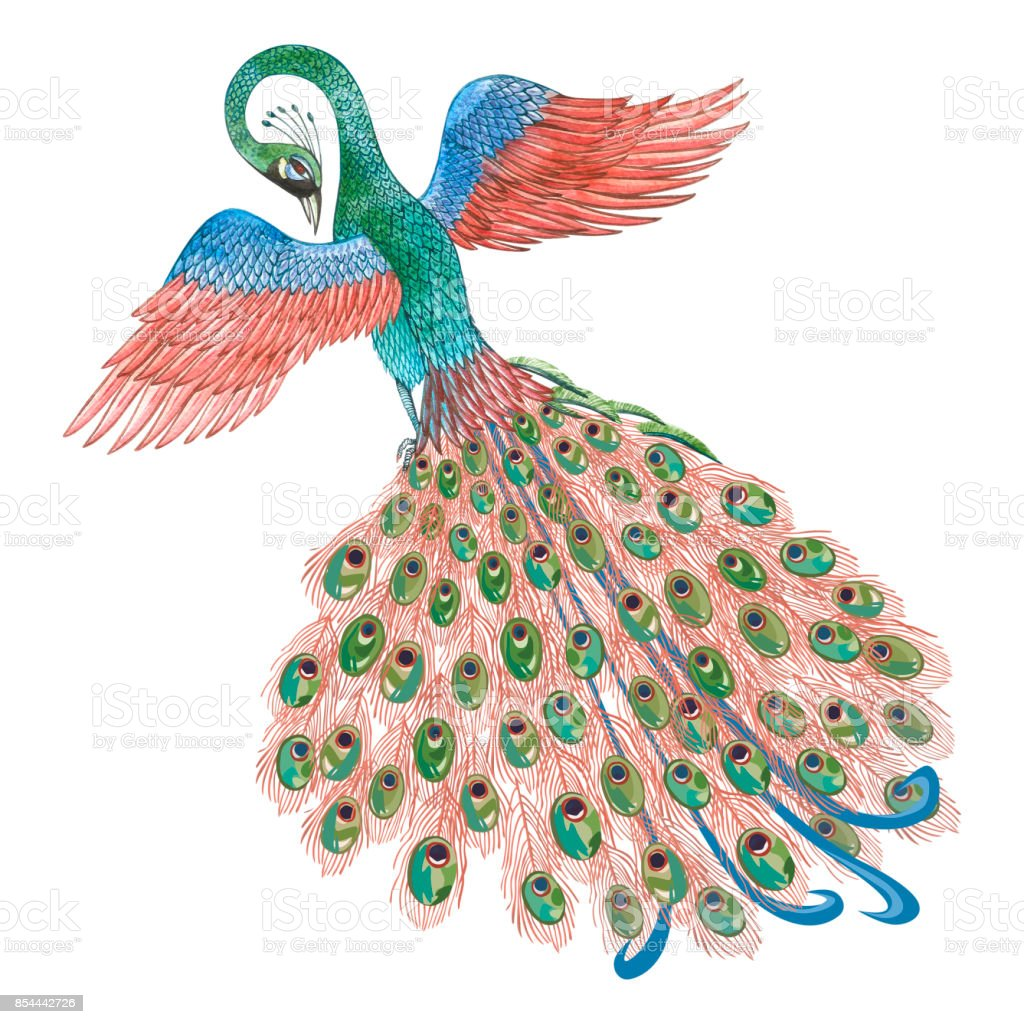 Peacock Watercolor Illustration Isolated On White Background Vintage Decorative Elements For Retro Design Royalty