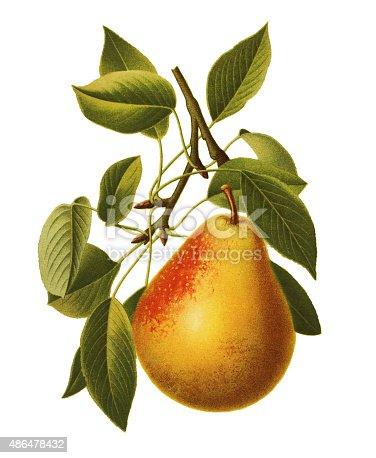 istock Pear 486478432