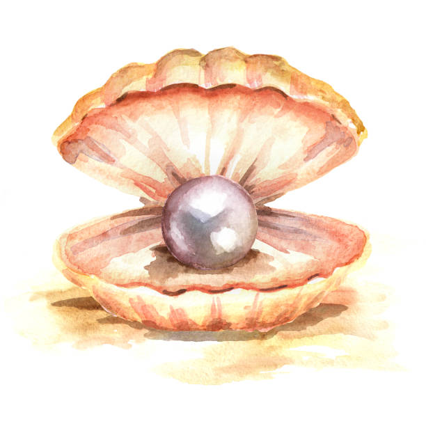 Open Clam Shell Illustrations, Royalty-Free Vector ...