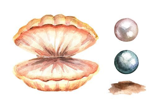 Pearls And Shell Set Hand Drawn Watercolor Illustration ...