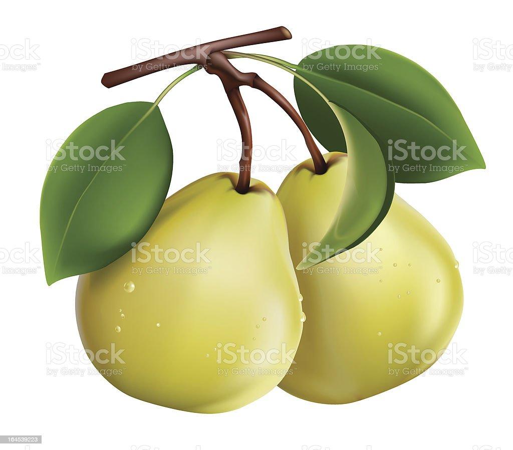 pears royalty-free stock vector art