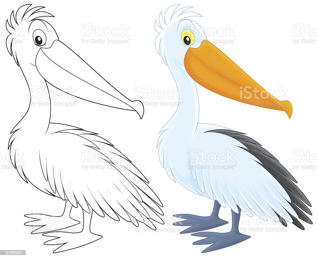 Pelican vector art illustration