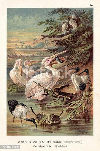 Illustrated Natural History of the Three Kingdoms Illustrierte Naturgeschichte der drei Reiche Franz Strässles - Wilhelm Nitzschke, Stuttgart 1888