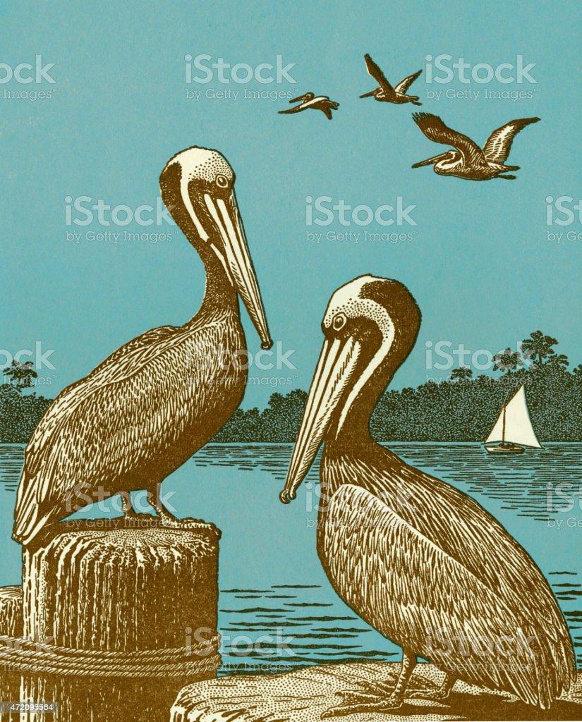 Pelicans vector art illustration