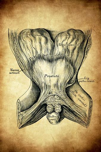 Pelvis ligaments