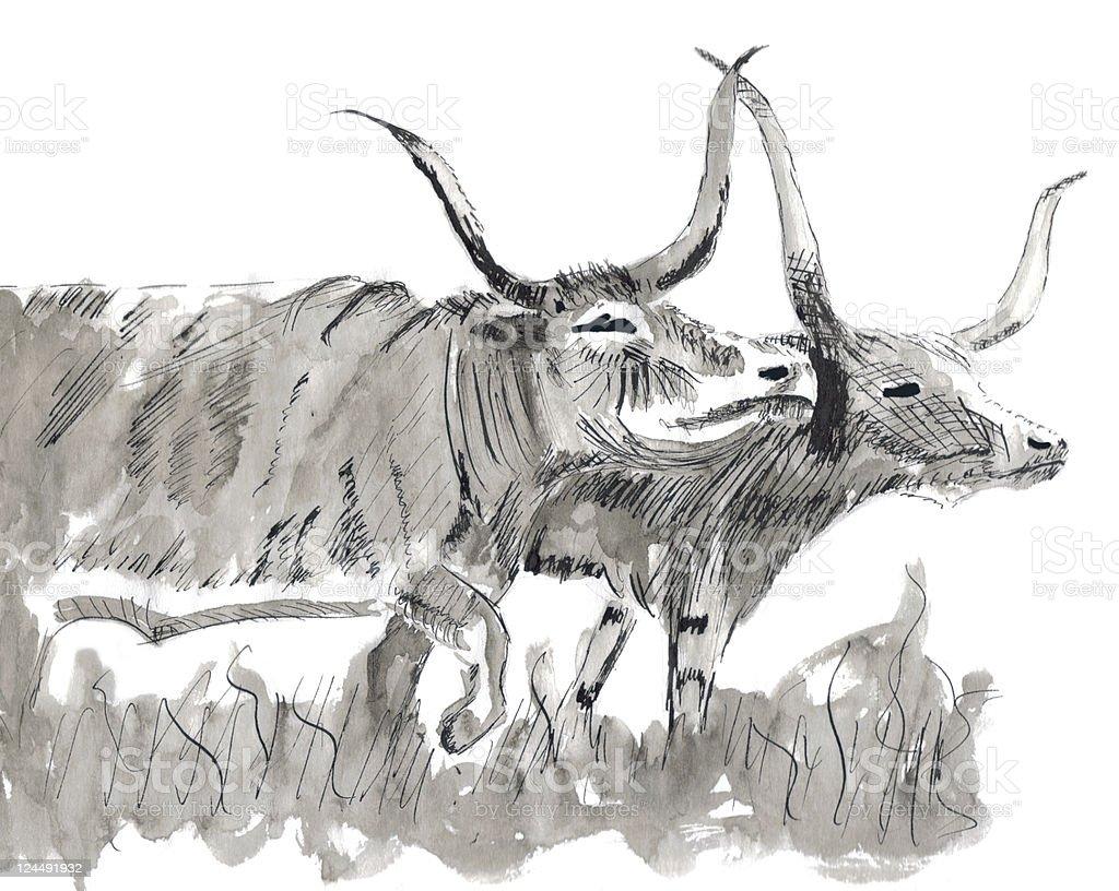 Pen and ink long horns vector art illustration