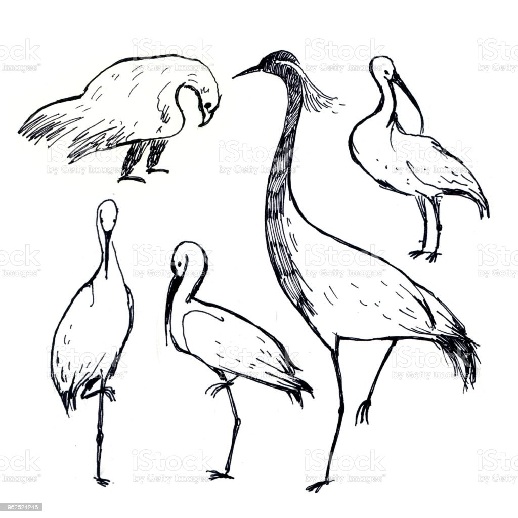 pen drawing illustration. Black and white birds stork, eagle and shadoof isolated on white background - Royalty-free Animal stock illustration