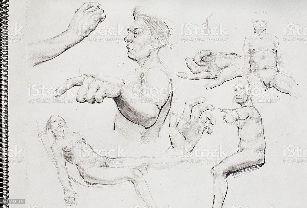 Dibujo A Lápiz - Arte vectorial de stock y más imágenes de Anatomía ...