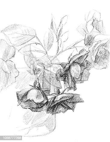 ᐈ Imagen De Lápiz De Dibujo De Un Ramo De Rosas
