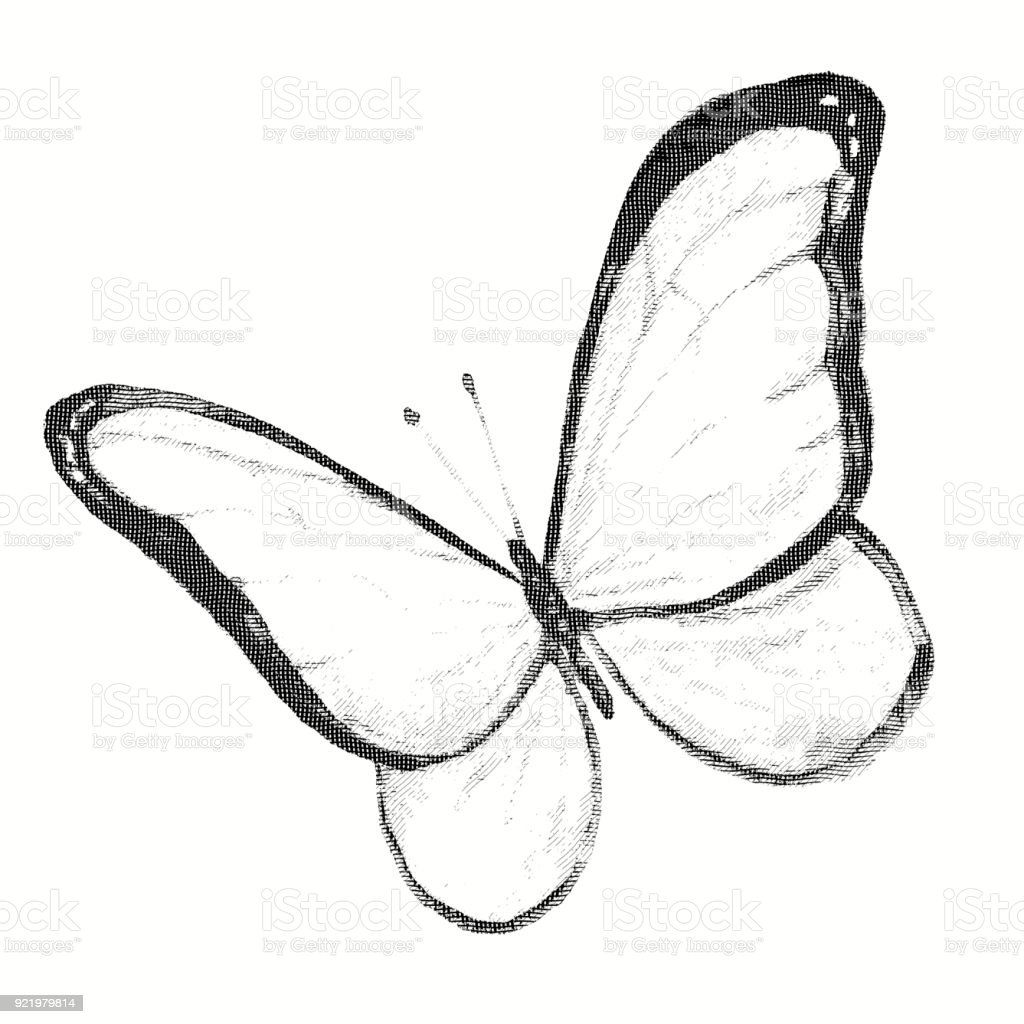 Pencil drawing of a butterfly engraving royalty free pencil drawing of a butterfly