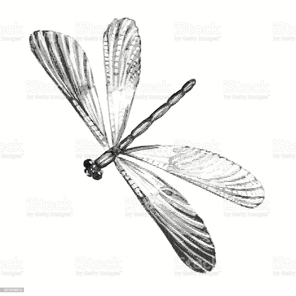 Pencil drawing of a dragonfly engraving stock illustration