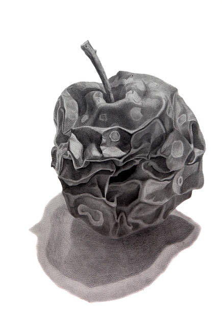 pencil drawing of a rotten apple with shadow - rotten apple stock illustrations, clip art, cartoons, & icons