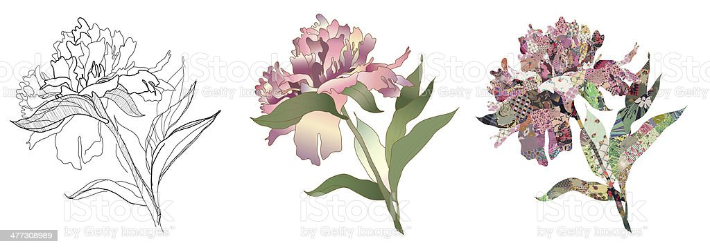 peony drawing, color and quilt set vector art illustration