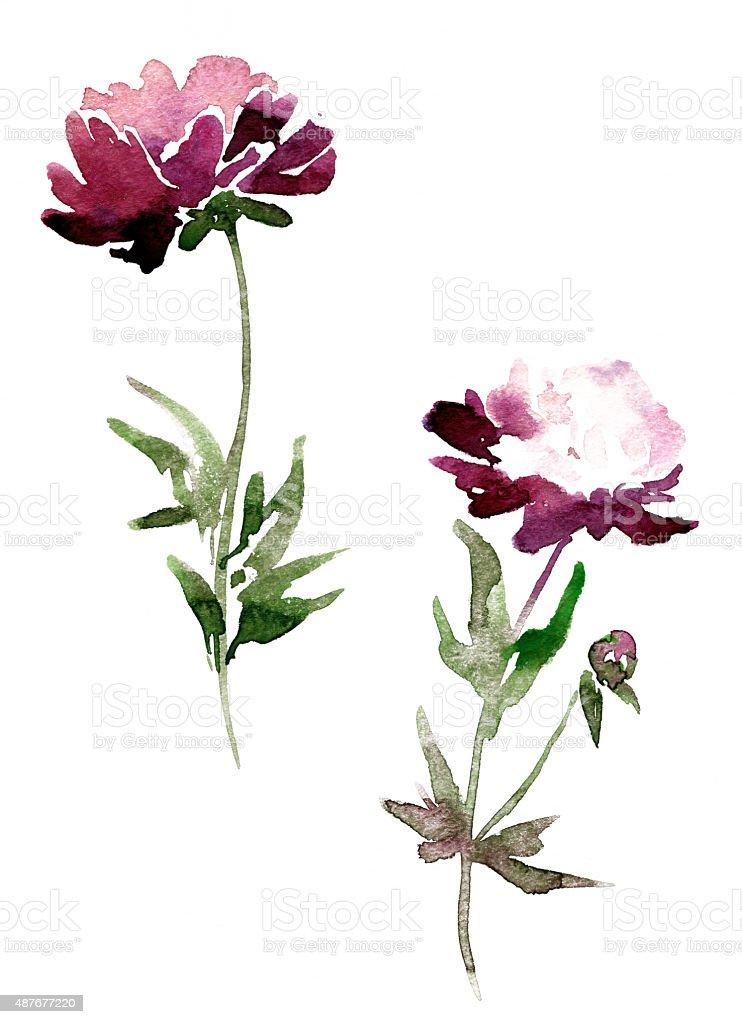 Pfingstrose Blumen Zeichnen Mit Aquarell Stock Vektor Art Und Mehr