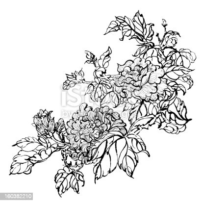 Chinese traditional ink painting, peony flowers on white background.