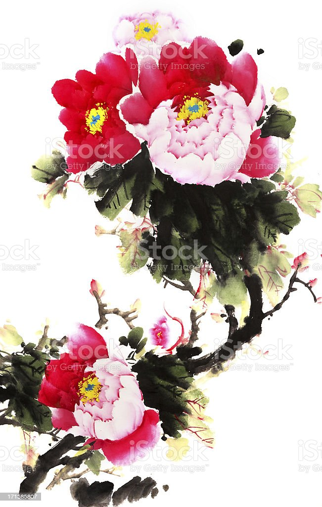 peony vector art illustration