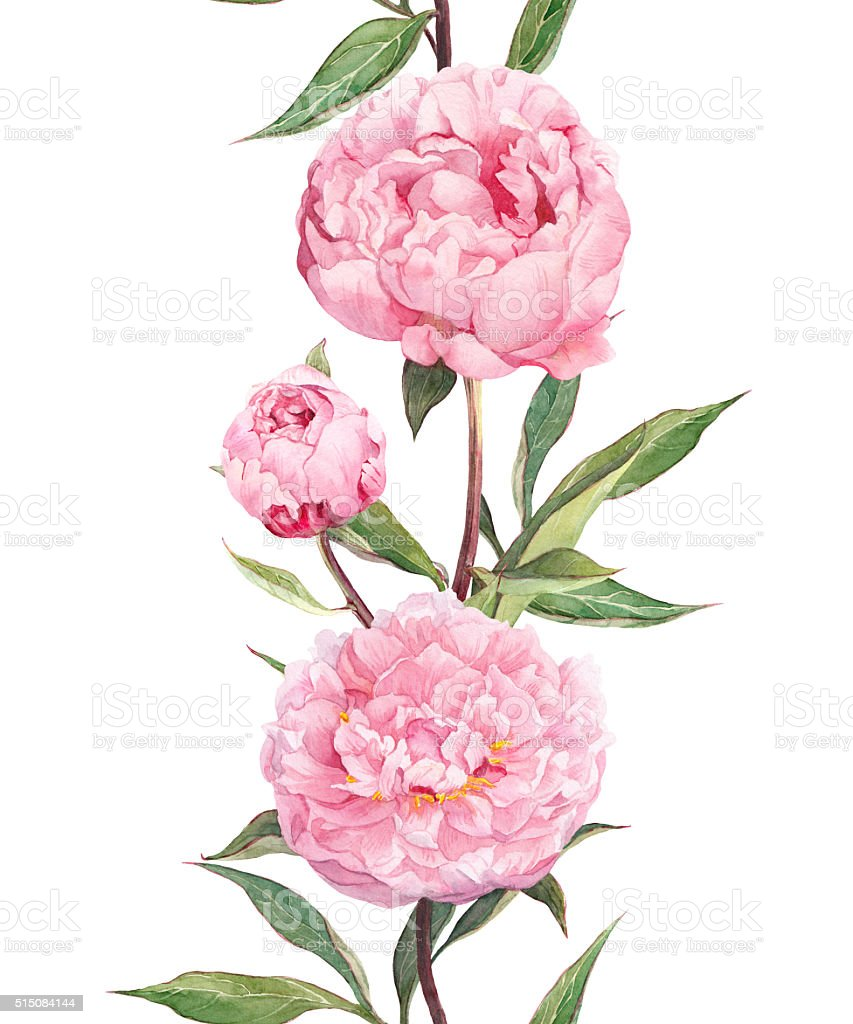 Peony Pink Flowers Seamless Floral Border Stripe Watercolour Stock
