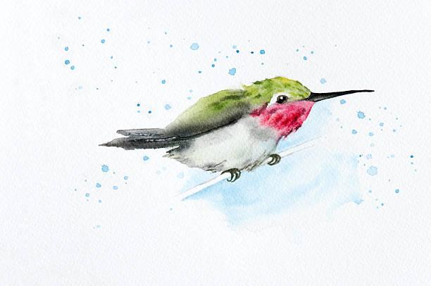 Perched Hummingbird vector art illustration