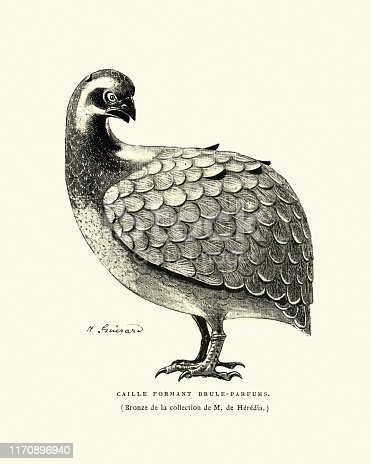 Vintage engraving of Perfume burner in the shape of a quail, Japanesse art
