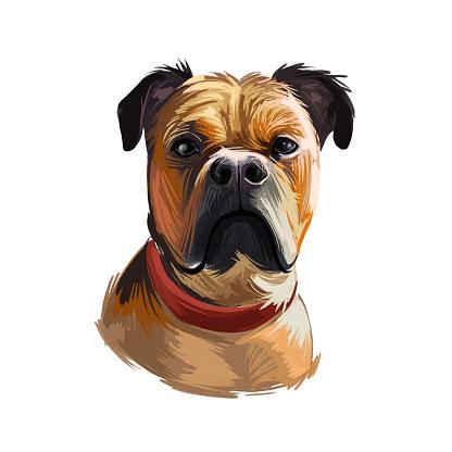 Perro de Presa Mallorquin dog portrait isolated. Digital t-shirt print and puppy cover design, clipart. Mallorquin Mastiff, Perro Dogo, Presa Canario Mallorquin, Majorcan Mastiff, Majorcan Bulldog.