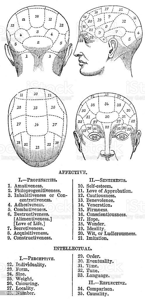 Phrenology vector art illustration